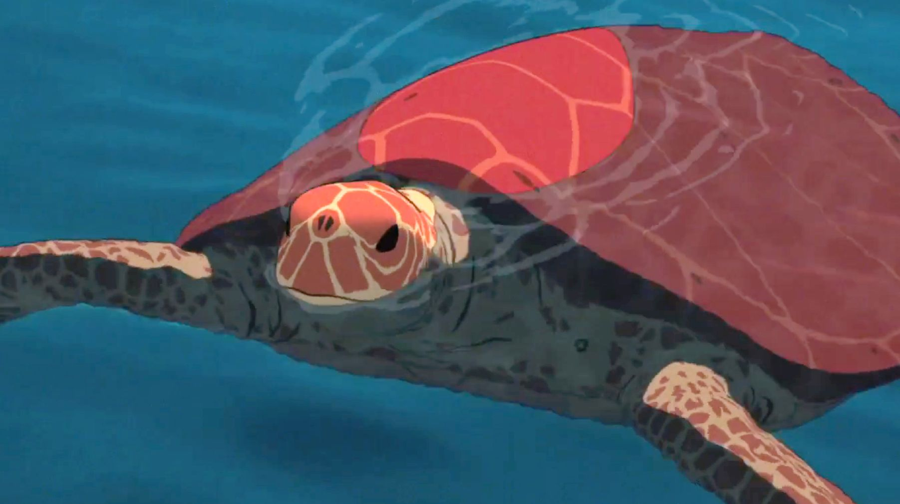 The Red Turtle Close-Up