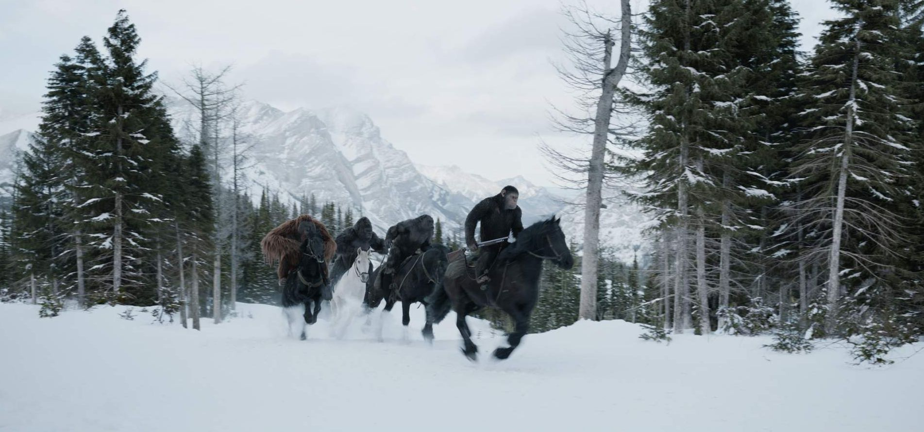 New still from War for the Planet of the Apes