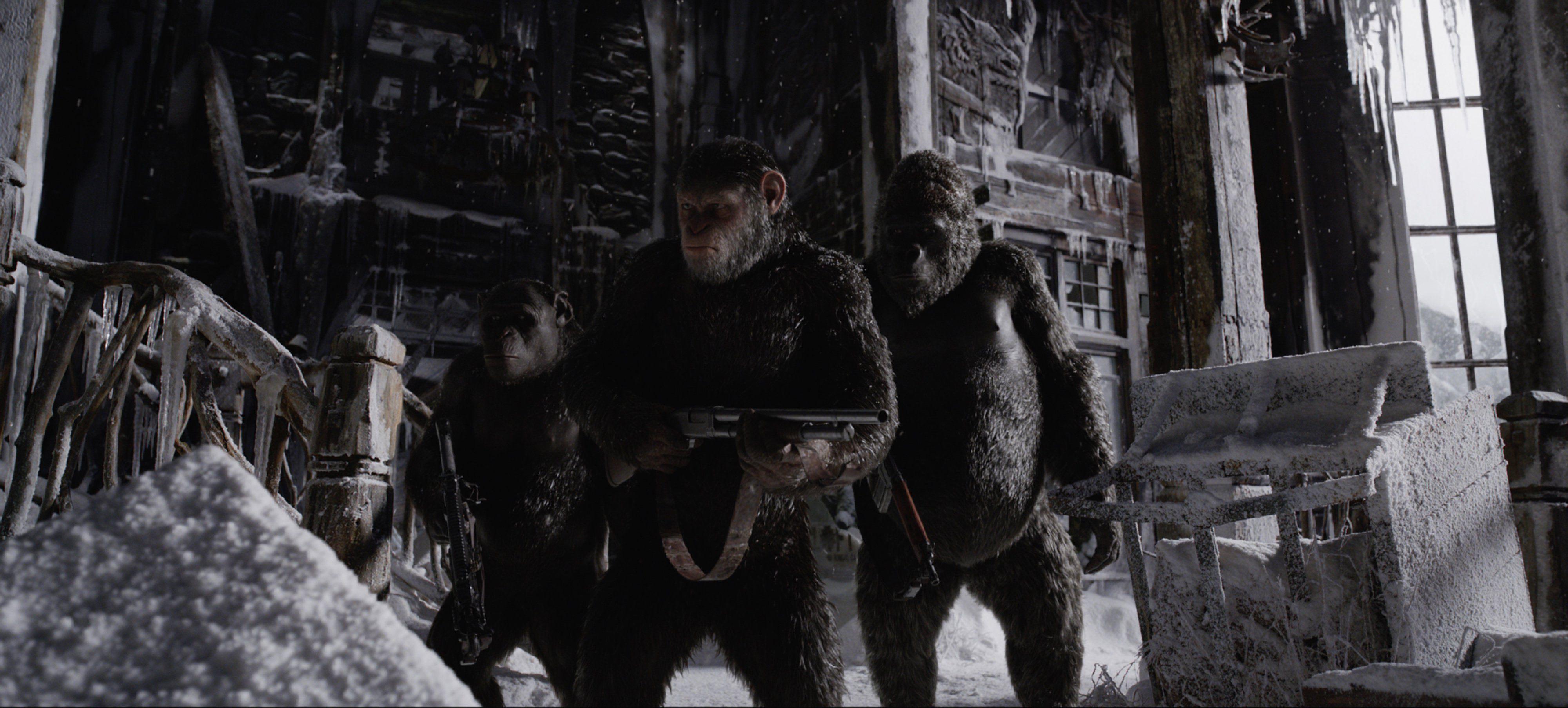 Apes at war