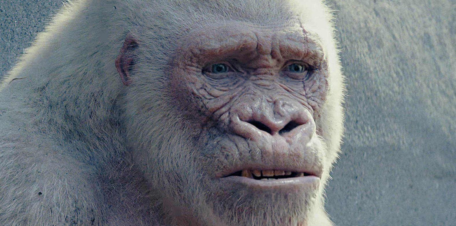 George the Albino Gorilla