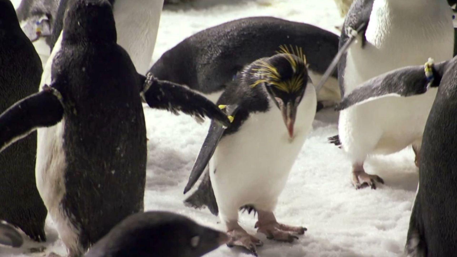 Fotos concentracion pinguinos 2012 56