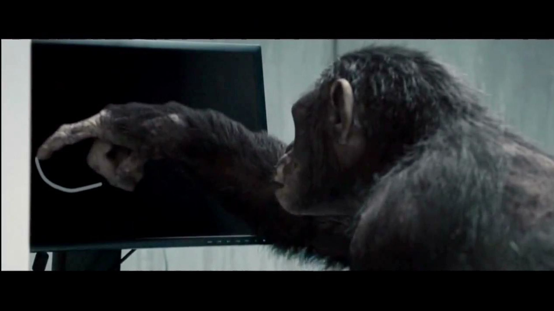 Don't ever let them catch you. Rise of the Planet of the Apes